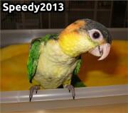 Speedy2013