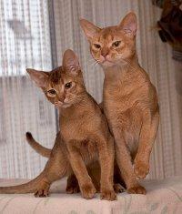 Ghid rapid de ingrijire a pisicilor