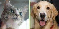 Winnie, pisica anului si Toby, cainele anului