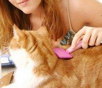 Periajul pisicii